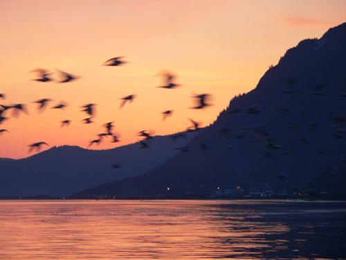 1birds (44k image)