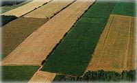 aerialcrop (10k image)