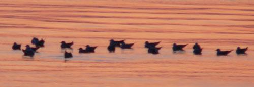 birds3 (30k image)