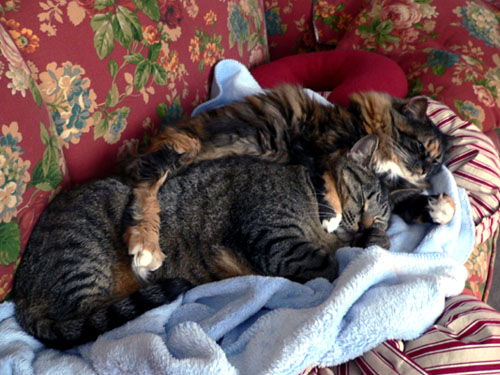 cats-spooning (85k image)