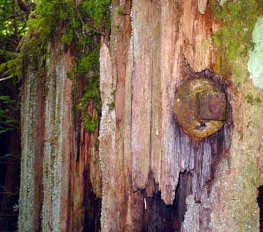 cedar-bolt (58k image)