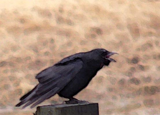 crow2 (43k image)