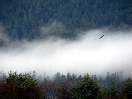 eagle1 (40k image)