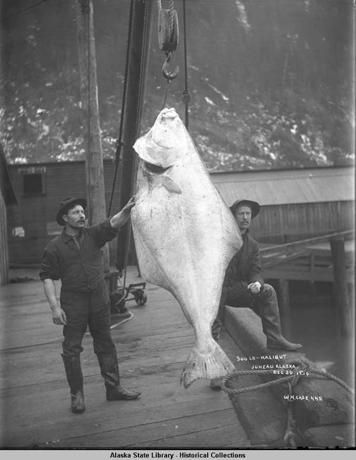 huge-halibut (58k image)