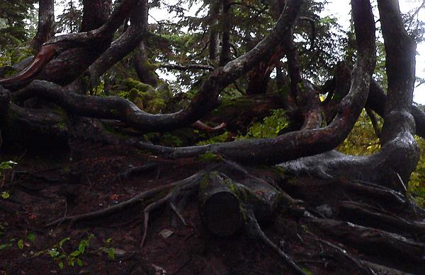 mount-roberts-alpine10 (166k image)