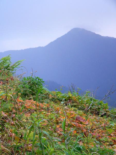 mount-roberts-alpine18 (177k image)