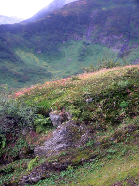 mount-roberts-alpine25 (203k image)
