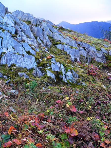 mount-roberts-alpine5 (256k image)
