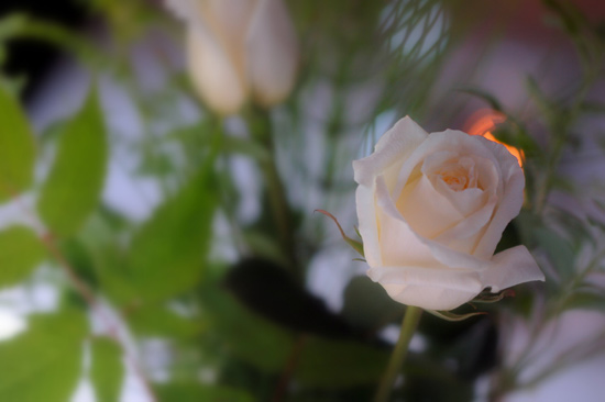 roses-candles (48k image)
