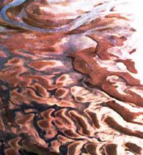sandbar-lowtide (42k image)