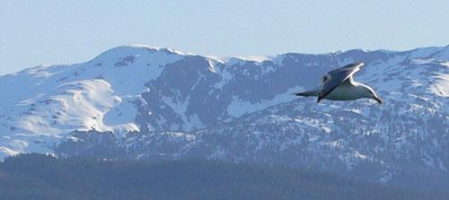 sea-gull-mountains (35k image)