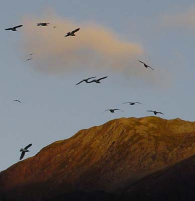 seagulls3 (25k image)