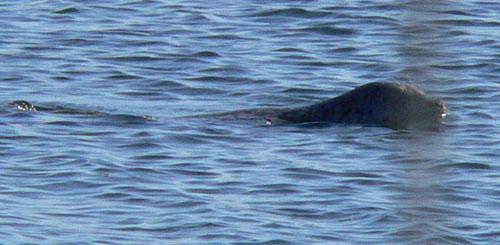 seal (71k image)