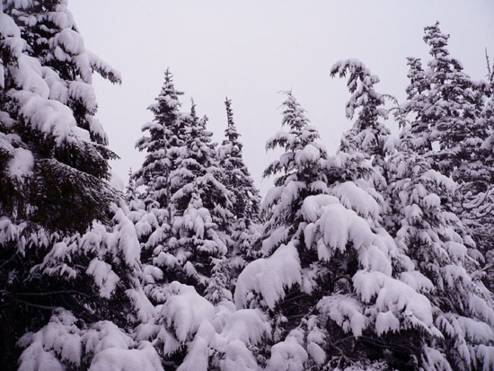 snowy-trees-in-front-of-library (98k image)