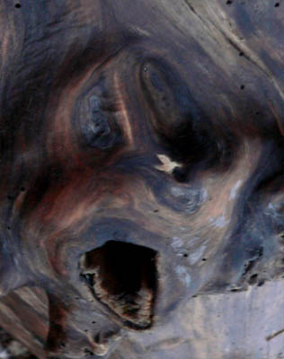 the-scream-wood (37k image)