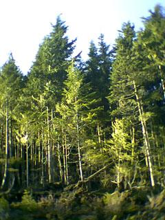 trees_outside (54k image)