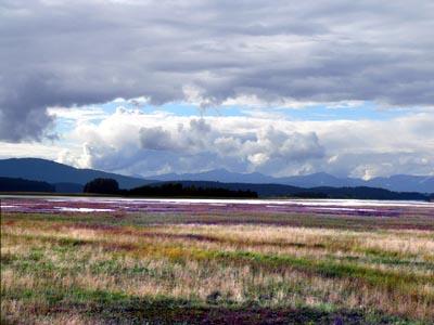 wetlands100 (43k image)