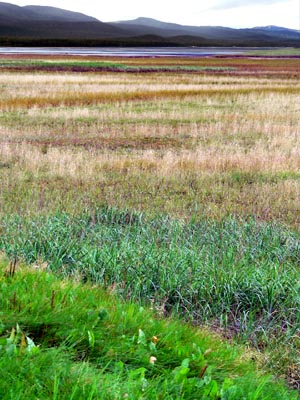 wetlands103 (63k image)