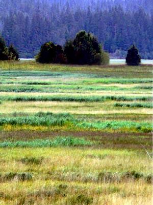 wetlands101 (52k image)