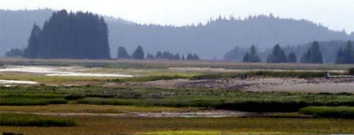 wetlands3 (28k image)
