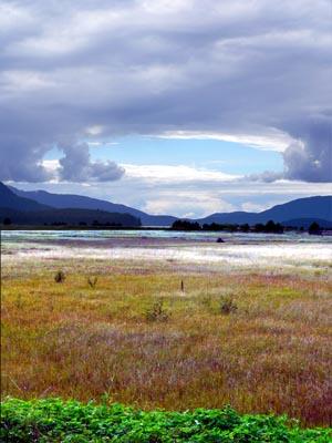 wetlands5 (44k image)
