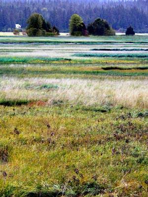wetlands4 (66k image)