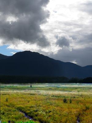 wetlands6 (36k image)