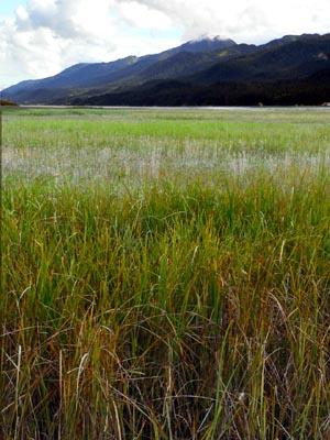 wetlands7 (54k image)