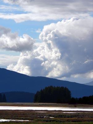 wetlands8 (33k image)