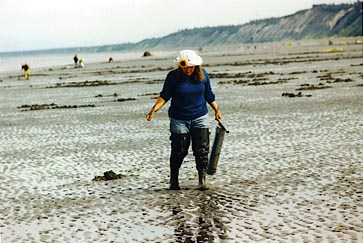 Digging for Clams in Alaska