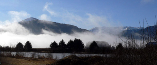 fog through trees on sunny day in southeast alaska juneau